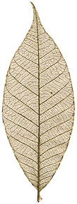 """Rubber Tree Leaves -- 1.5"""" - Blue"""