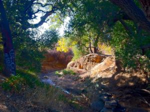 Along the banks of Thompson Creek