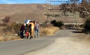 A local horse stops to see Rebeccah's painting.