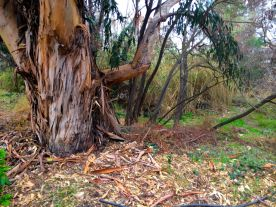 I just thought this would make a cool painting. Under the right branch, you can make out a homeless camp.
