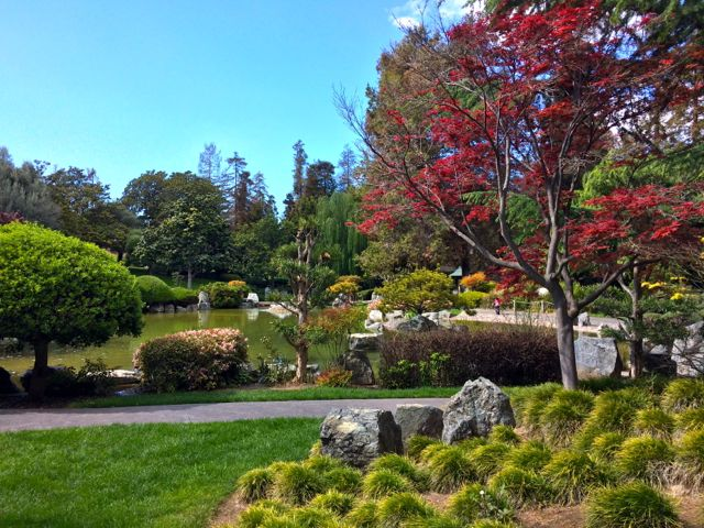 View of a pond in the Japanese Friendship Garden.