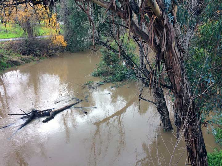 Coyote Creek 1/9/16