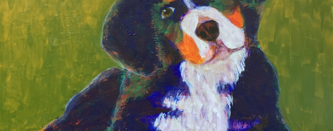 Bernese Mtn Dog Puppy  - SOLD - Prints Available
