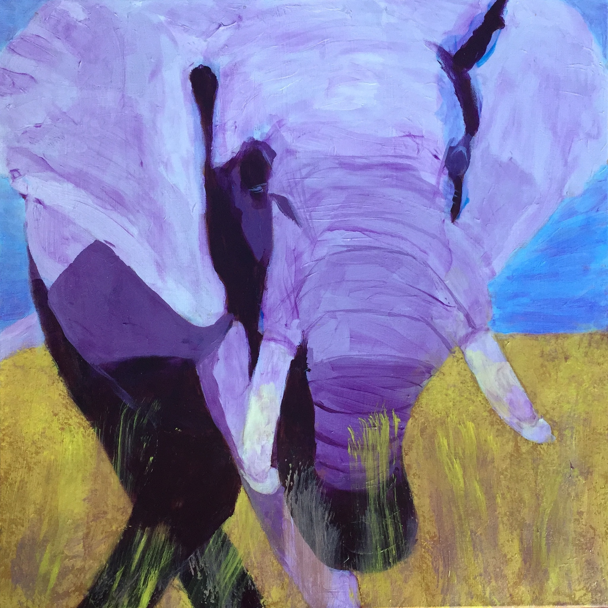 Elephant - SOLD - Prints Available