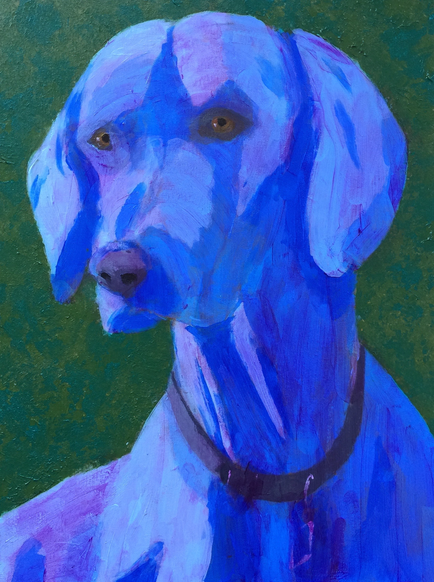 Blue Weimaranar - SOLD - Prints Available