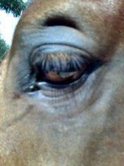 Guardami negli occhi...