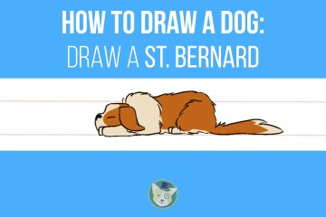 How to Draw a Dog - Draw a St. Bernard Step by Step