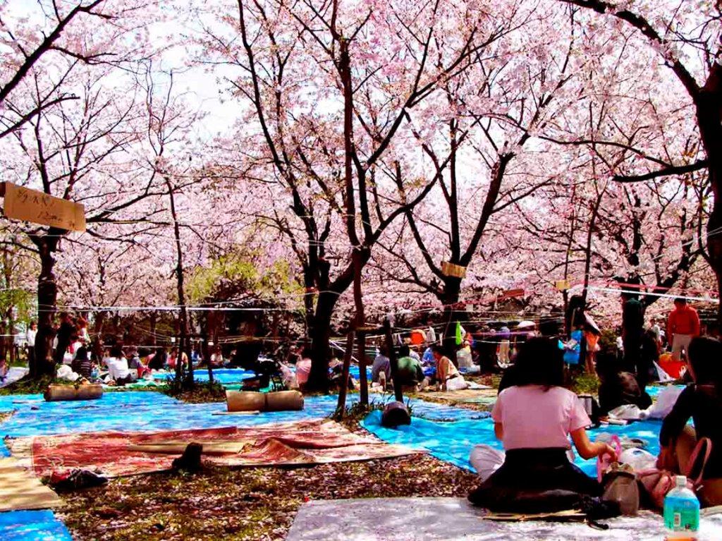 festival-japones-de-primavera-2017-en-la-ciudad-de-mexico