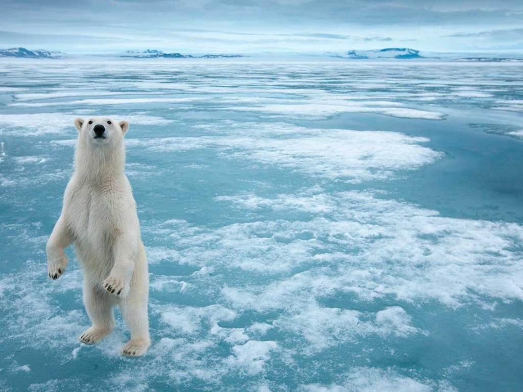 viaje al artico por realidad virtual
