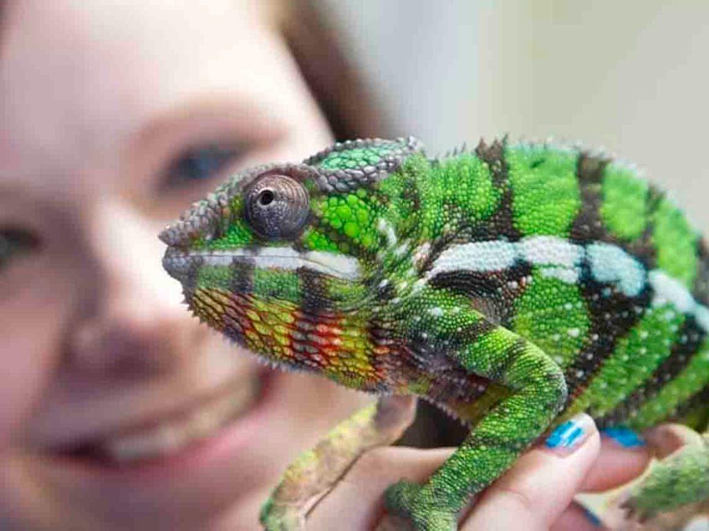 expo-de-reptiles-2017-en-ciudad-de-mexico-04