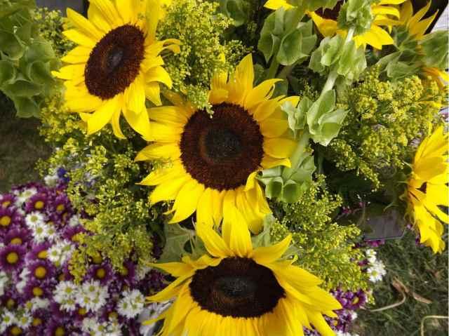 1er Festival de Flores de Primavera de xochimilco