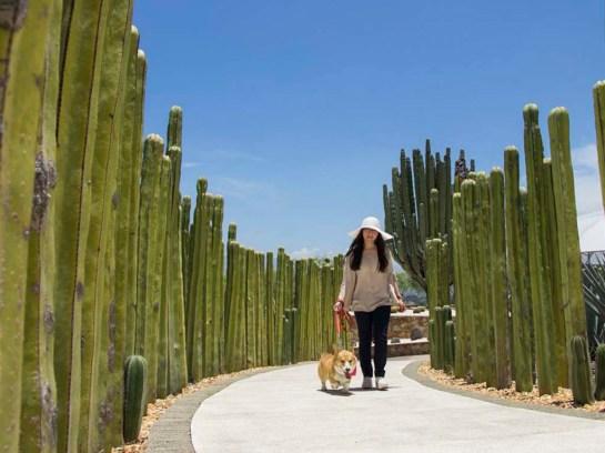 dog-friendly-jardines-mexico-ciudadanos-en-red