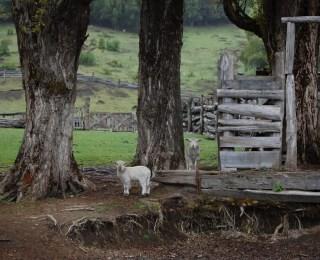 Galería de imágenes: viaje a Villa La Angostura