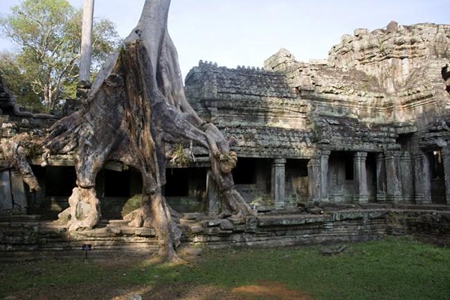 Un árbol completo sobre el templo, impactante