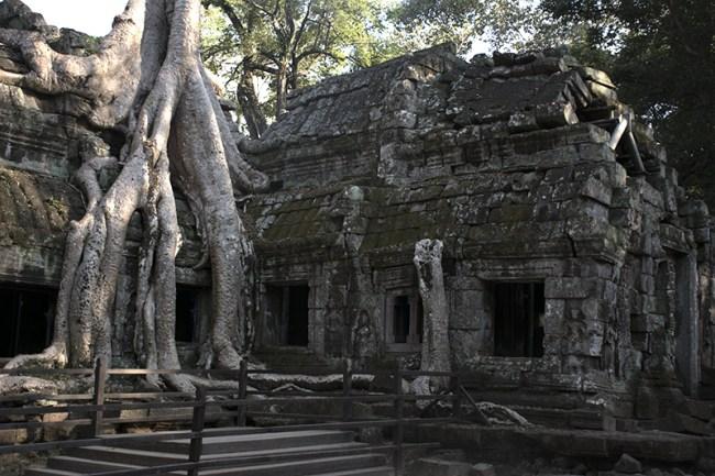 Postal típica de Angkor Wat, las raíces sobre el templo
