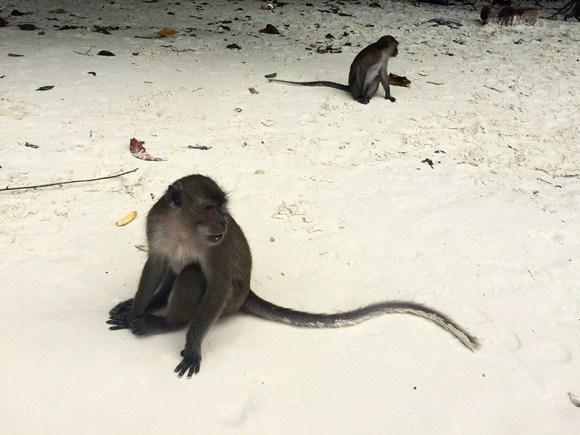 Monos de Monkey Beach, Ko Phi Phi