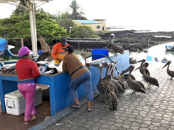Pájaros en Galápagos