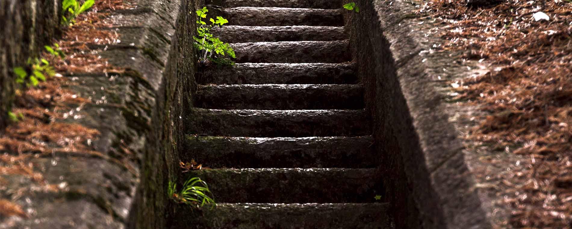 Don Diseño La escalera del diseño - Aplicar diseño en la empresa no solo es tener un logotipo molon