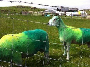 Donegal animal owners have ben asked to exercise caution when colouring animals.