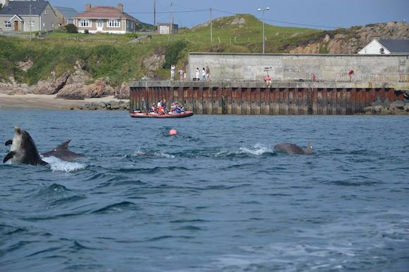 Dolphins in the water at Malin head today. Tourists have been flocking there to see them.