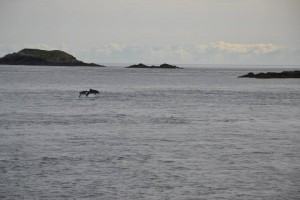 Sam and Maguire popping out of the water yesterday evening
