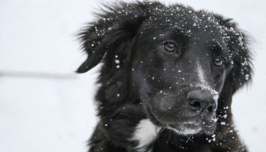ISPCA issue tips to keep your pets safe during the cold snap