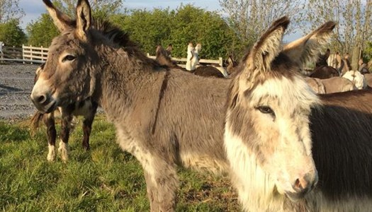 Donegal couple face dire days at the Donegal Donkey Sanctuary