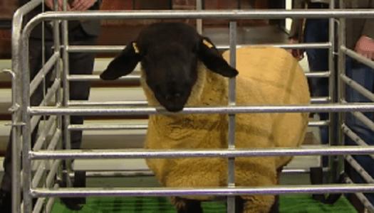 Watch: Did you spot Ryan Tubridy's subtle dirty joke about Donegal lamb last night?