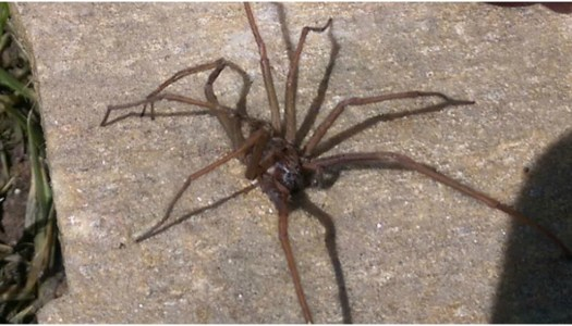 Yikes! 5 tips for keeping these eight-legged creeps out of your home