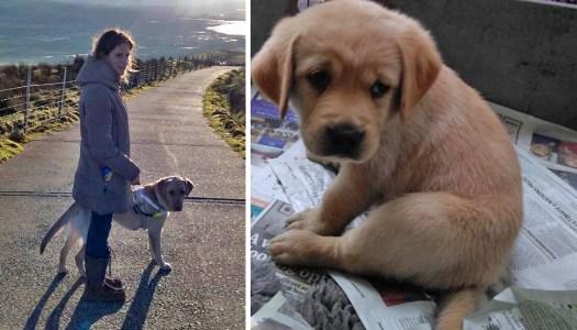 Meet OJ – the cute pup with a wonderful 'tale'