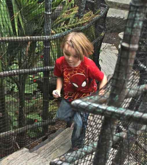 Log-bridge-tiger-trail-safari-park