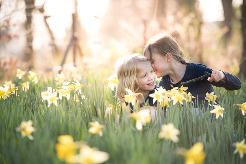 family portraits Edinburgh - little girls sitting in daffodils whispering