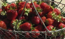 Seasonal Foods for Spring