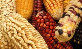Seasonal Autumn Foods for Sustainable Living