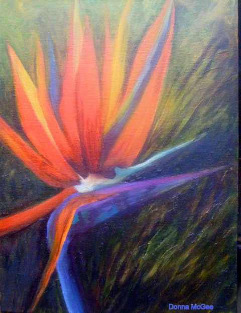 Bird of Paradise, wild african flower, orange flower, colourful flower