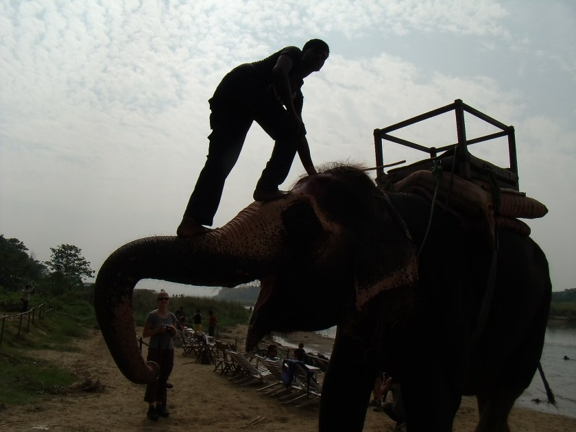Art + Travel Adventure to Nepal - Chitwan Day 2 Fun with the elephants