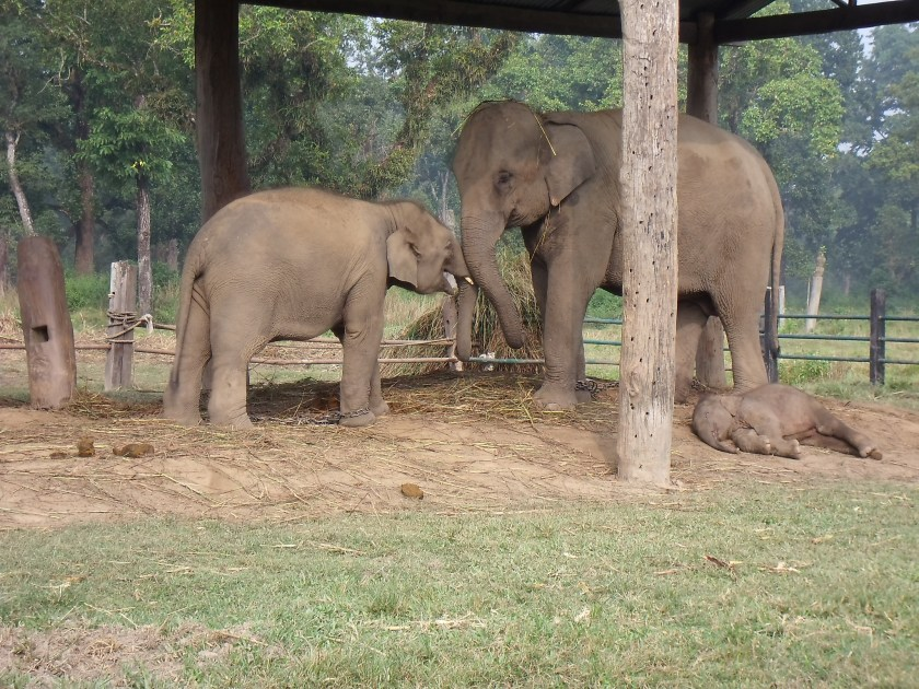 Elephant Reserve - Art + Travel Adventure Nepal - Chitwan National Park - Day 1