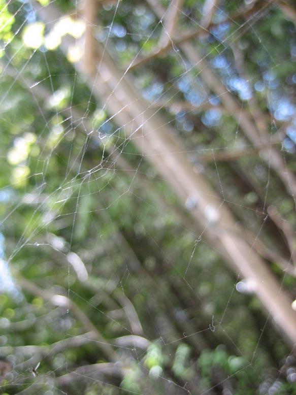 caledonian web