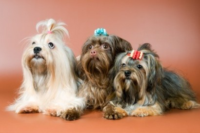 Pets Shops em Blumenau