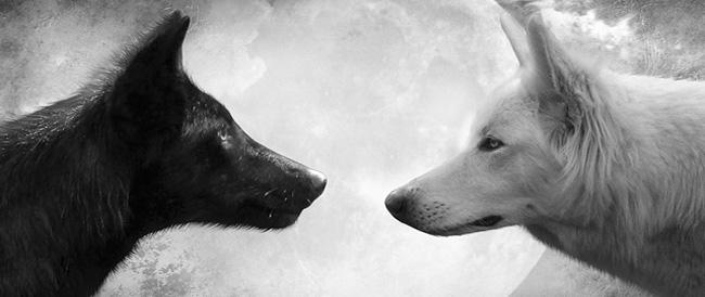lobo_blanco_lobo_negro
