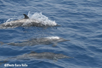 Dolphins playing with Don Questo