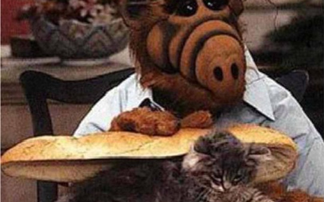 Caption This! The ALF Sandwich