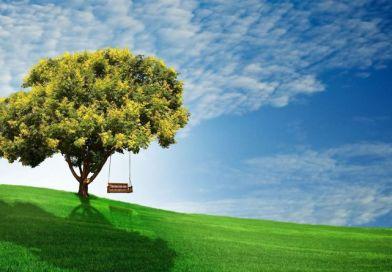 Európai Parlament: még több erdő kell!