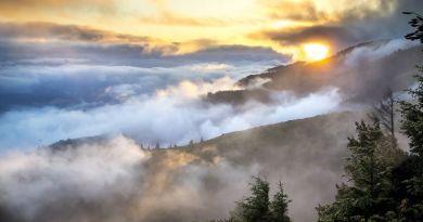 Európa ikonikus vadvilágát és őserdeit fenyegeti a környezeti bűnözés