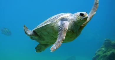 Sokkoló kampány indult az óceáni műanyaghulladékok ellen