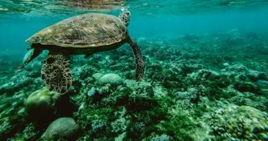 160 műanyag szemétbe szorult teknőst mentettek meg Bangladesben