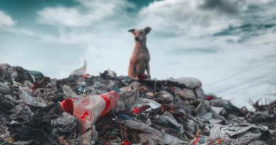 """Valós tilalmak és a """"szennyező fizet""""-elv érvényesítése kell a hulladékmentes Magyarországhoz"""