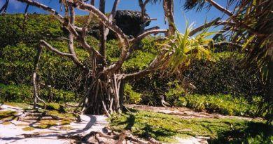 Megfulladhat a műanyagszemétben az UNESCO világörökség részét képező sziget