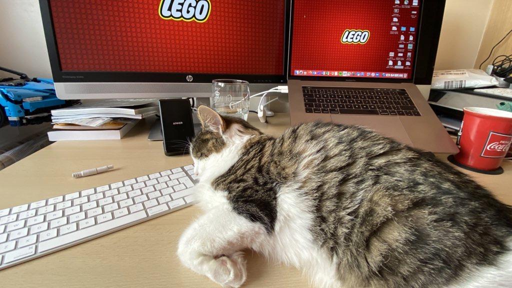 Cat sleeping on a computer keyboard