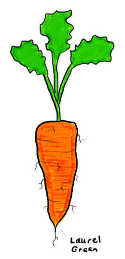a drawing of a carrot